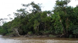 Amazon River High Quality Wallpaper