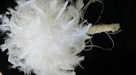 Bouquet Feather Photo Free