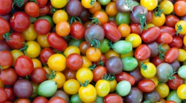 Cherry Tomatoes Wallpaper