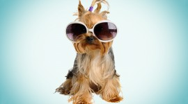 Dog With Glasses Desktop Wallpaper For PC