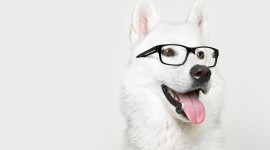 Dog With Glasses Desktop Wallpaper HD