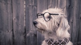 Dog With Glasses High Quality Wallpaper