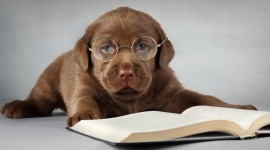 Dog With Glasses Wallpaper Download Free