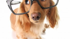 Dog With Glasses Wallpaper For IPhone