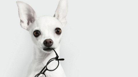 Dog With Glasses wallpapers high quality