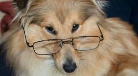 Dog With Glasses Wallpaper HD
