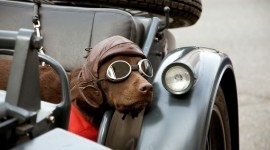 Dog With Glasses Wallpaper High Definition