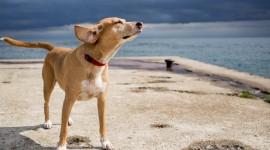 Dogs On Beach Desktop Wallpaper For PC