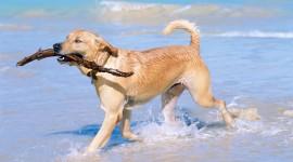Dogs On Beach Desktop Wallpaper HD