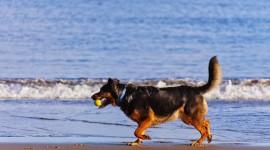 Dogs On Beach Desktop Wallpaper HD#1