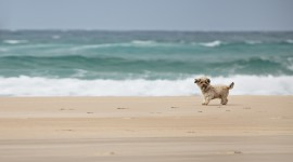 Dogs On Beach Desktop Wallpaper#1