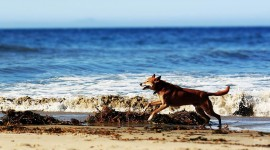Dogs On Beach Photo Download#1