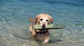 Dogs On Beach Photo Free#1