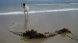 Dogs On Beach Photo Free#2