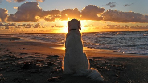 Dogs On Beach wallpapers high quality