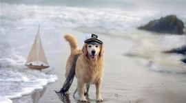 Dogs On Beach Wallpaper