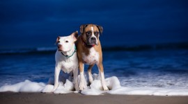 Dogs On Beach Wallpaper For PC