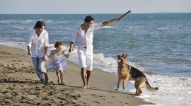Dogs On Beach Wallpaper Full HD