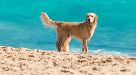 Dogs On Beach Wallpaper HQ#1