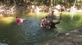 Elephant Swimming Photo Download#3