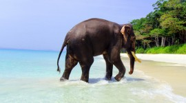 Elephant Swimming Photo Free
