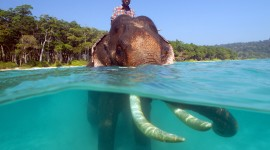 Elephant Swimming Photo#2