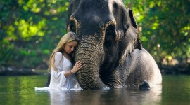 Elephant Swimming Wallpaper Download