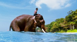 Elephant Swimming Wallpaper Gallery