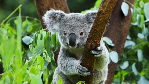 Eucalyptus Forest wallpapers high quality
