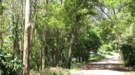 Eucalyptus Forest Photo