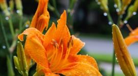 Flowers With Dew Drops Desktop Wallpaper