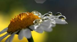 Flowers With Dew Drops Desktop Wallpaper HD