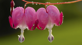 Flowers With Dew Drops Photo