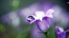 Flowers With Dew Drops Photo Free#2