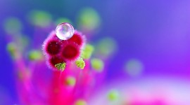 Flowers With Dew Drops Wallpaper 1080p
