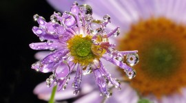 Flowers With Dew Drops Wallpaper Download