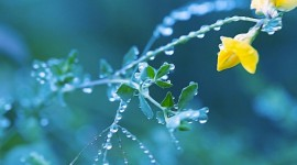 Flowers With Dew Drops Wallpaper Free