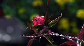 Flowers With Dew Drops Wallpaper Gallery