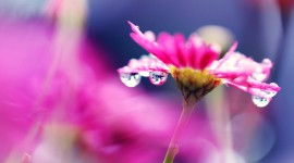 Flowers With Dew Drops Wallpaper HQ#2