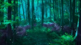 Forest Fairy Wallpaper Download Free