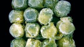 Frozen Vegetables High Quality Wallpaper