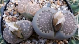 Living Stones Photo#2
