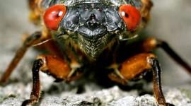 Locust Invasion Best Wallpaper