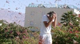 Locust Invasion Photo