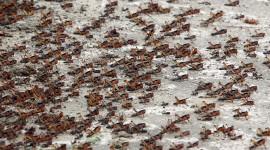 Locust Invasion Wallpaper
