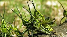 Locust Invasion Wallpaper For Desktop