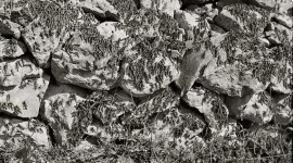 Locust Invasion Wallpaper For IPhone