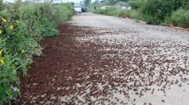 Locust Invasion Wallpaper For PC