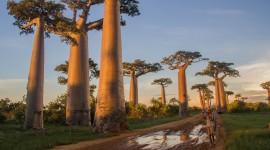 Madagascar Island Desktop Wallpaper