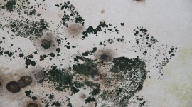Mold High Quality Wallpaper